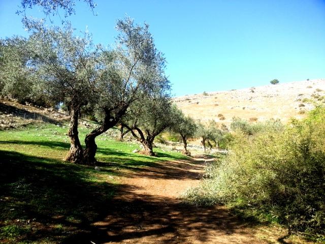 Jesus Trail, Galilee, Israel